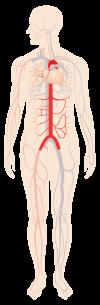 تدخلات البطن والحوض