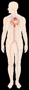 Coronary Intervention (PCI)