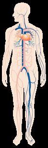 قسطرة القلب الأيمن (RHC)